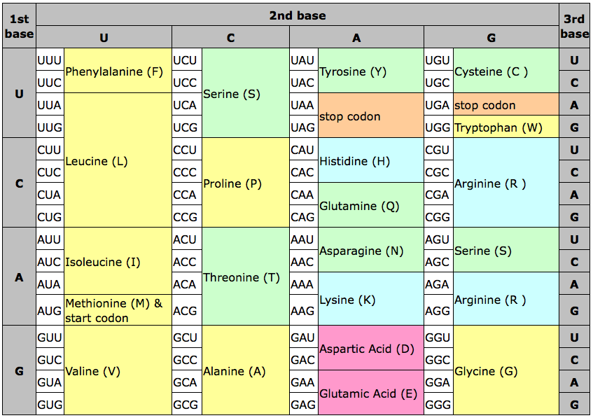 Amino Acid Chart Code How to determine which amino acids are